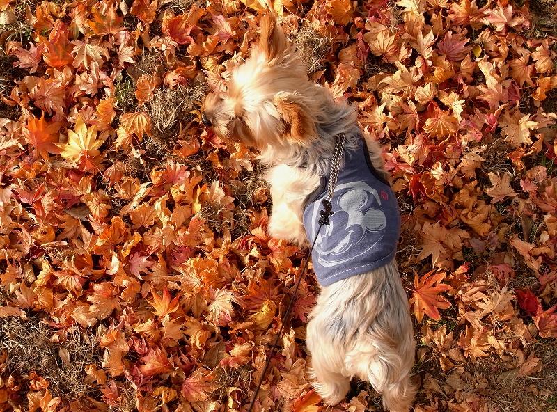 秋のお散歩コース GX200_a0160581_21283110.jpg