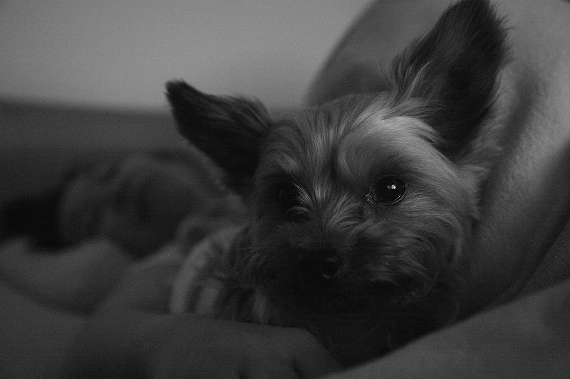夜勤明け 守るようなARUPY君 Leica D-Lux4_a0160581_2144018.jpg