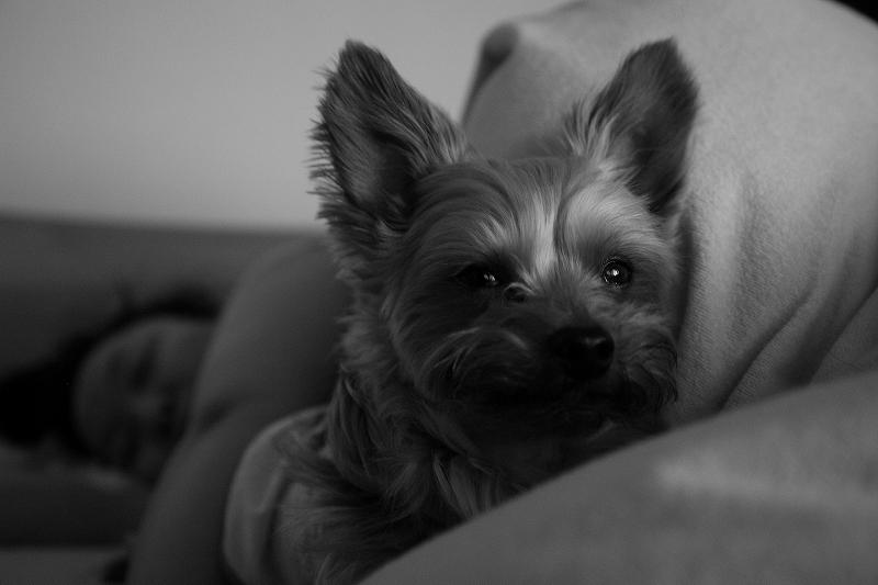 夜勤明け 守るようなARUPY君 Leica D-Lux4_a0160581_2145134.jpg