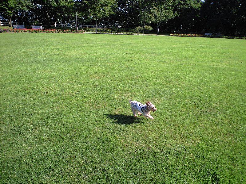 緑ヶ丘公園 お散歩で 悦ちゃんの旧友と遭遇_a0160581_22135423.jpg