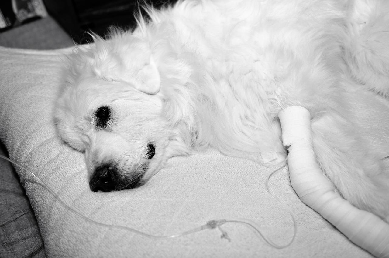 老犬ジョリ_e0171886_22452183.jpg