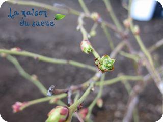 b0179591_20102078.jpg