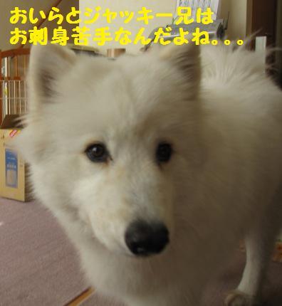 f0212597_143718.jpg