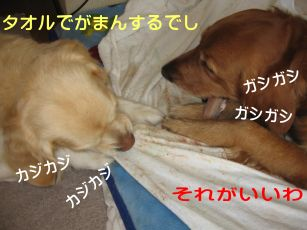 b0008217_17145667.jpg
