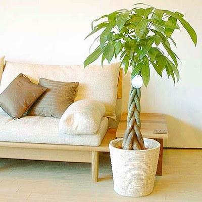 Money tree 3/4(木)_b0069918_12454375.jpg