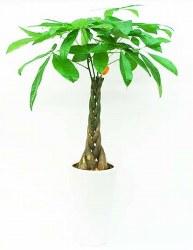 Money tree 3/4(木)_b0069918_1312737.jpg