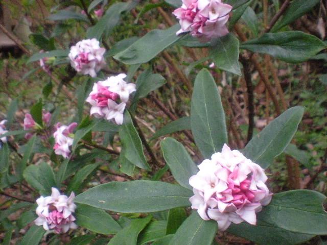 [春花」の季節~~_a0125419_1055129.jpg