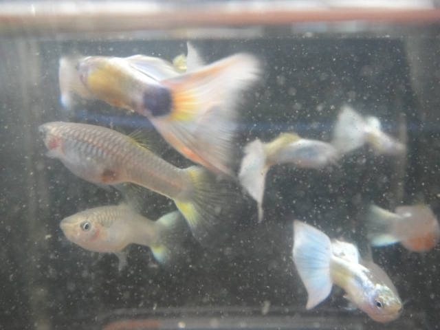熱帯魚・水草_f0189122_1714499.jpg