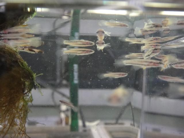 熱帯魚・水草_f0189122_1731784.jpg