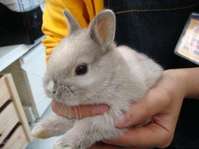 ウサギ_f0189122_18394229.jpg