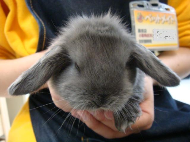 ウサギ_f0189122_18421011.jpg