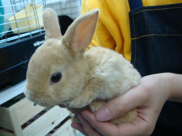 ウサギ_f0189122_18433663.jpg