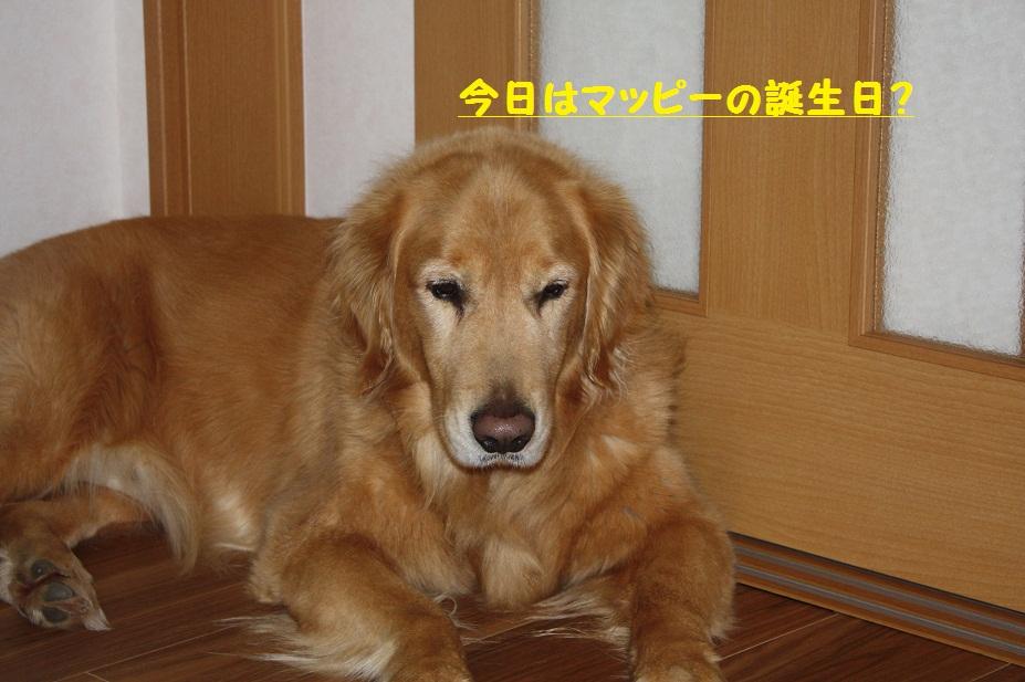 f0114128_20503895.jpg