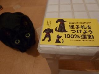 平成21年度熊本市動物取扱責任者研修会。_a0143140_2044612.jpg