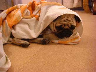 寒い日は寝て過ごすのが最適?_a0159640_2112335.jpg