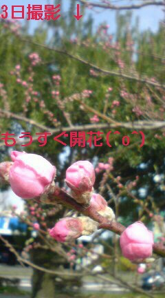 c0189388_6302741.jpg