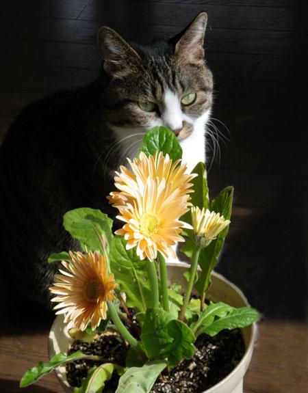 猫部屋の花とHuu♪_a0136293_17531597.jpg