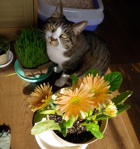 猫部屋の花とHuu♪_a0136293_17545979.jpg