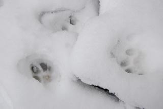 今日の雪に大喜びです。_a0112812_20214892.jpg