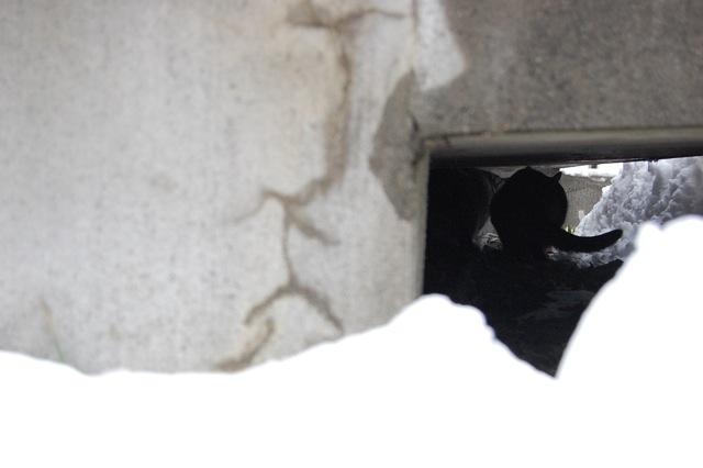 今日の雪に大喜びです。_a0112812_20223472.jpg
