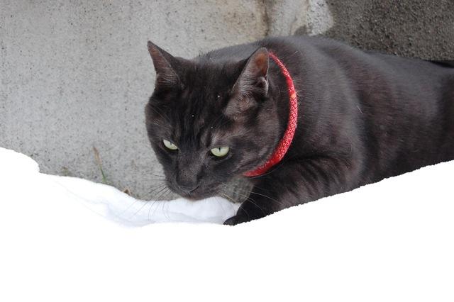 今日の雪に大喜びです。_a0112812_20243157.jpg