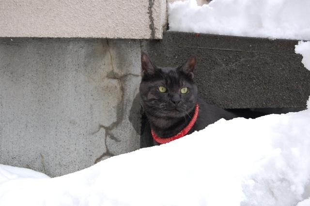 今日の雪に大喜びです。_a0112812_20254996.jpg