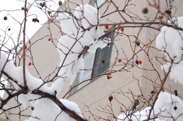 今日の雪に大喜びです。_a0112812_20331057.jpg