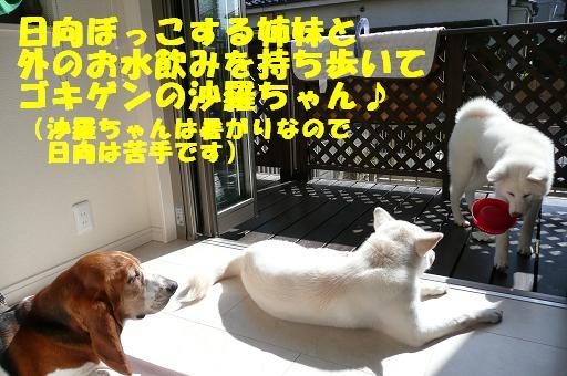 f0121712_1054492.jpg