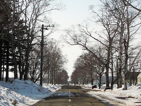 2010年3月5日(金):雪の金曜日_e0062415_17423319.jpg