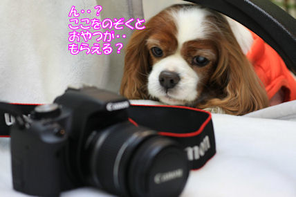b0185323_23472096.jpg