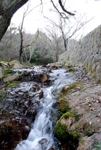 山の春_e0103024_22442317.jpg