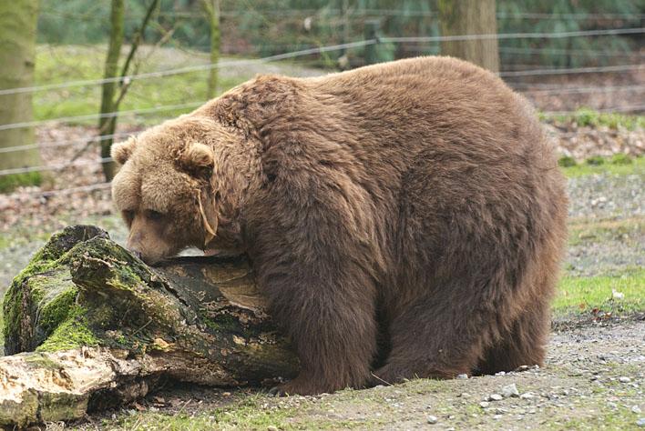 Zoo Wuppertal_a0091329_2161371.jpg