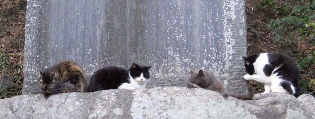 猫構っててもしょうがない.が_d0057843_1941341.jpg