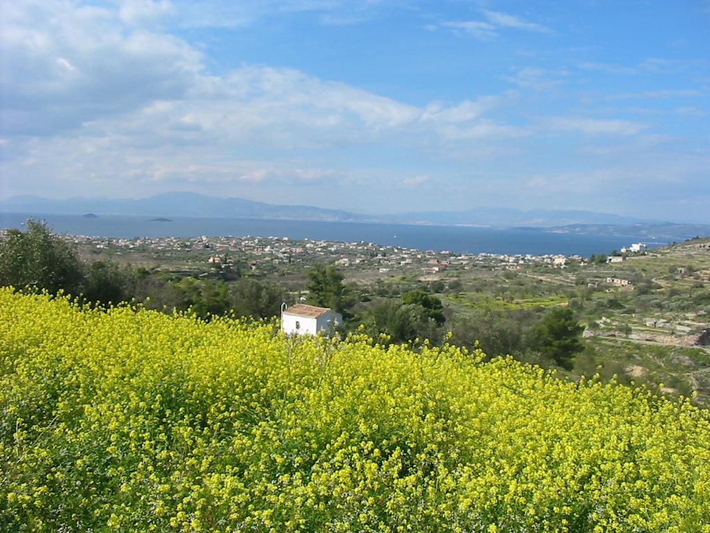 島の春風景_e0171285_15134054.jpg
