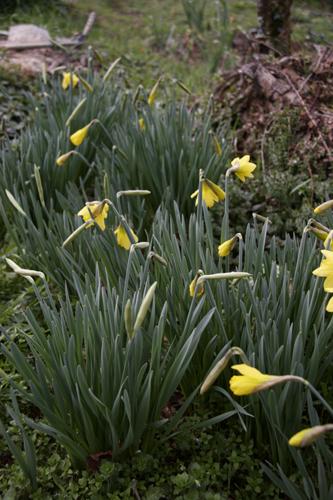 春の足音~3月の畑_f0106597_22132176.jpg