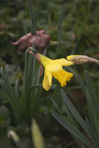 春の足音~3月の畑_f0106597_22181451.jpg