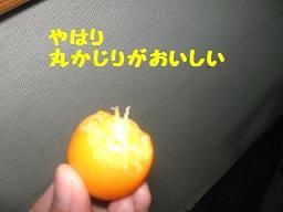 d0104209_950201.jpg