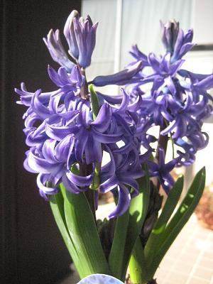 春はる春_b0135325_21314460.jpg
