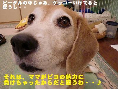 a0169935_1581021.jpg