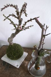 梅と桜_a0068339_1214761.jpg