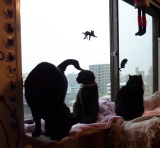 頭からしっぽ猫 空のぇるろった編。_a0143140_23113816.jpg