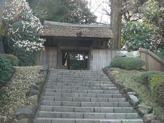 梅の次はいよいよ桜_a0159640_18462265.jpg