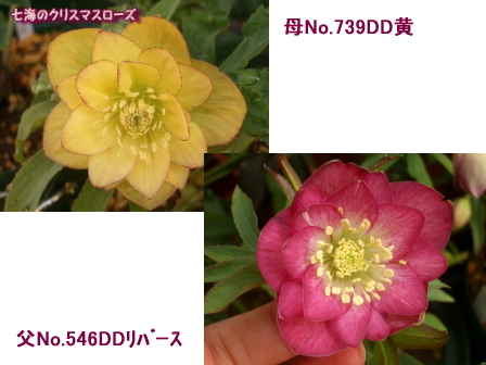 c0025140_1715664.jpg