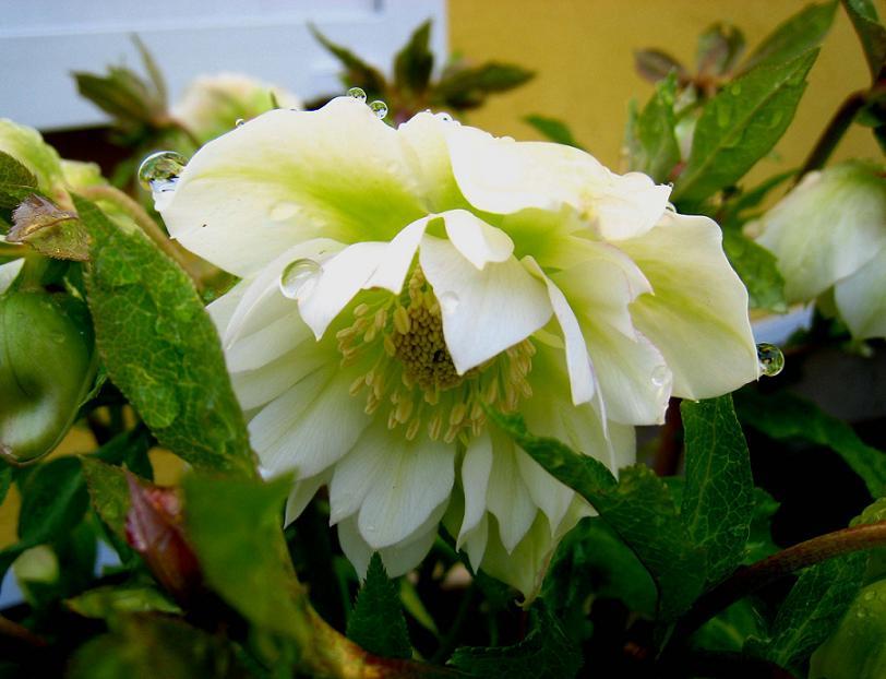 白梅の花が青空いっぱいに_a0107574_18585682.jpg