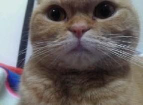 私は猫ストーカー_f0221284_22401540.jpg