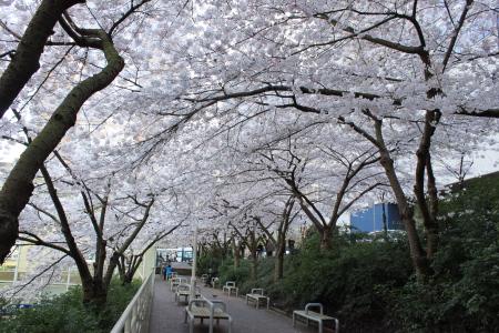 桜咲く、そして中華食べる。_d0129786_14374955.jpg