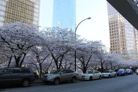 桜咲く、そして中華食べる。_d0129786_14525541.jpg