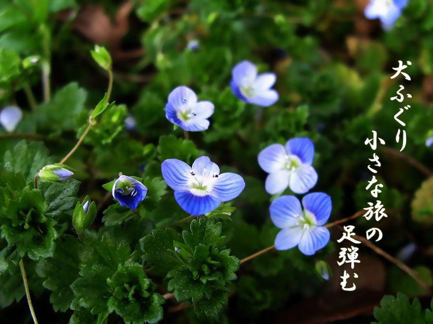f0137096_12595760.jpg