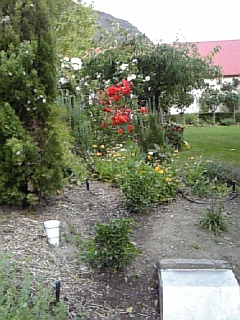 NZ南島の旅その④_f0116297_2044655.jpg