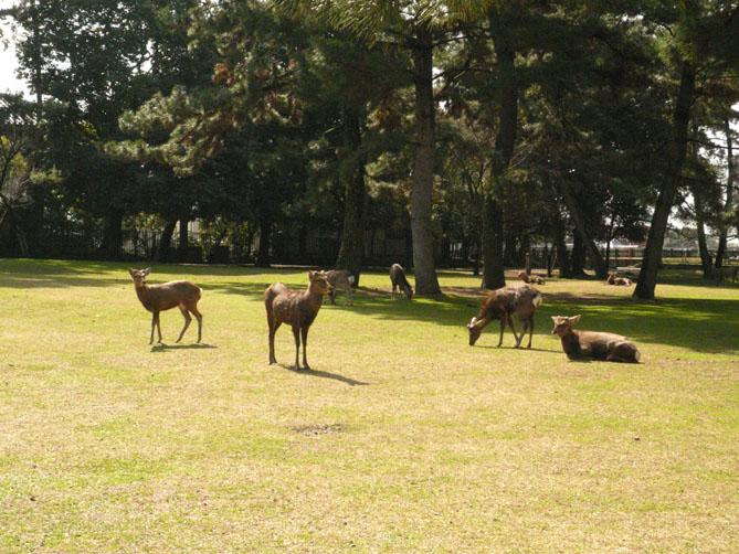 奈良への旅 其の一_f0201310_16202890.jpg